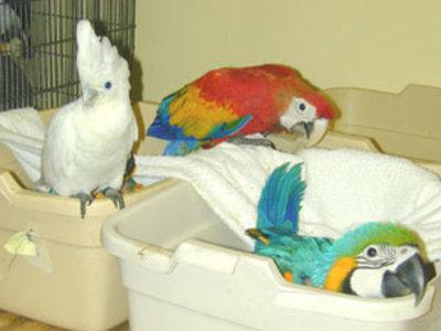 Parrot Birds and Fertile eggs 4 Sale in Bangkok Thailand